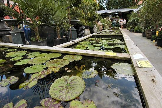 Kanapaha Botanical Gardens Gainesville Fl 2017 Top
